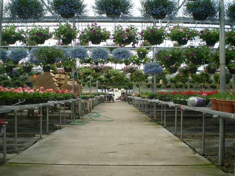 Hanging Plants In Greenhouse