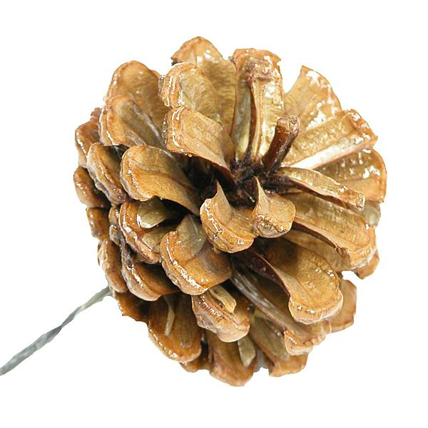 2in natural lacquered pine cone on soft wire pick pine cones