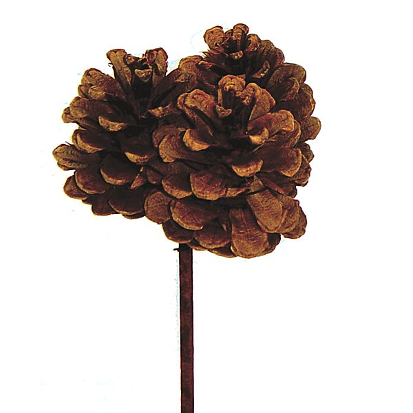 Medium natural pine cone cluster on 6in brown wood pick pine cones