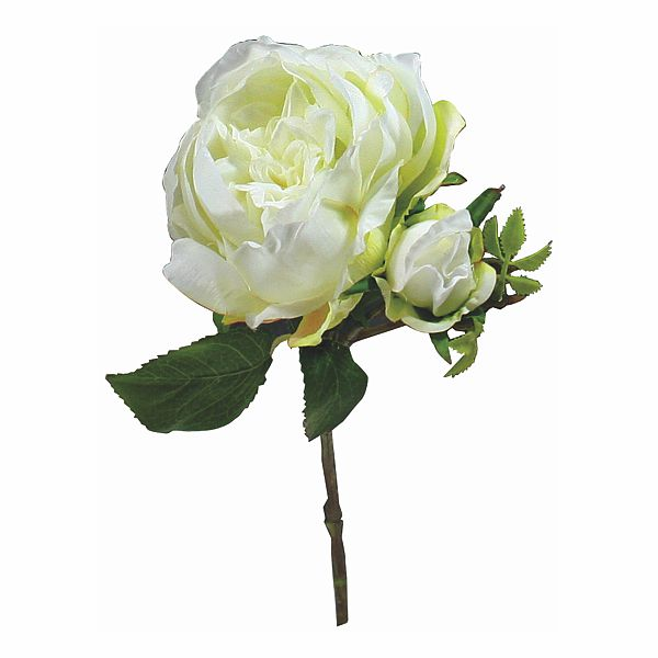 15 in. Cream/White Cabbage Rose W/ Bud