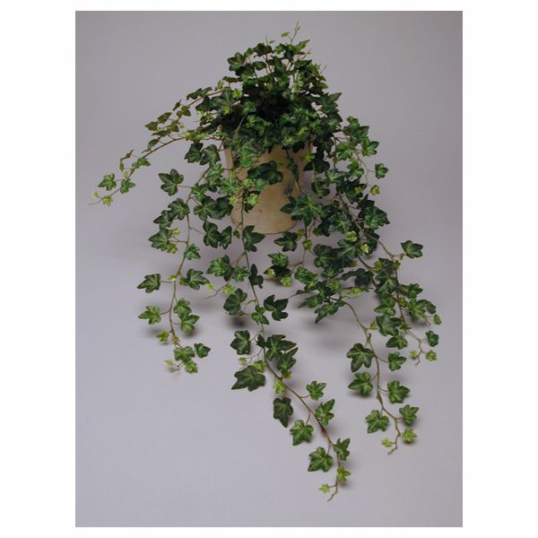 28 in.  Green Mini Ivy Bush x16