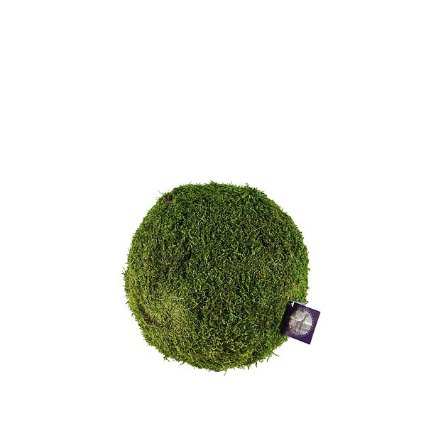 2.5 in. Preserved Super Green Moss Covered Balls