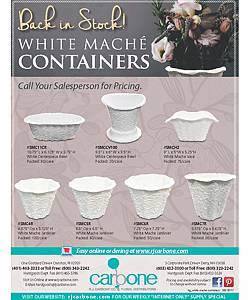 white maché containers
